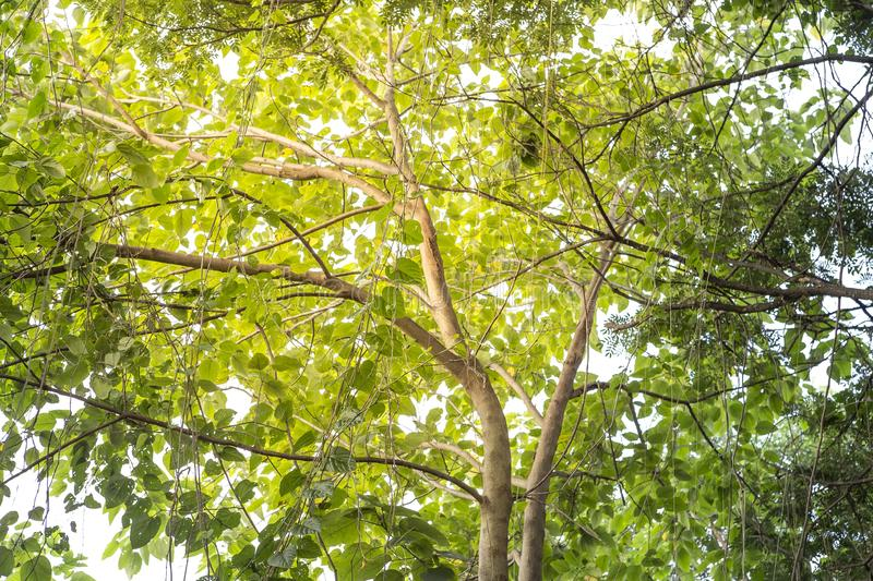 Nature concept background, under the green tree shade royalty free stock images