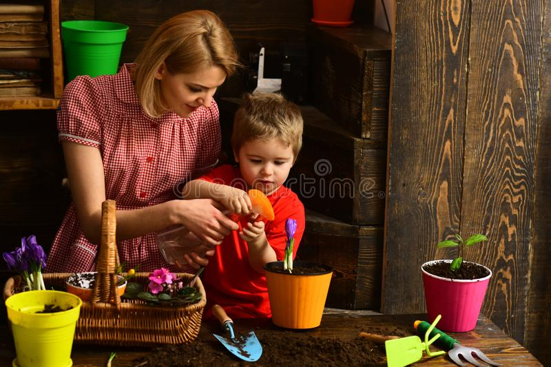 Nature concept. Family plant spring flowers in pot, nature. Beauty of nature. Nature of plants royalty free stock image
