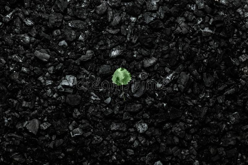 Nature concept, leaf on a dark coal background. Environmental pollution, coal mining, clean air, clean energy source royalty free stock photo