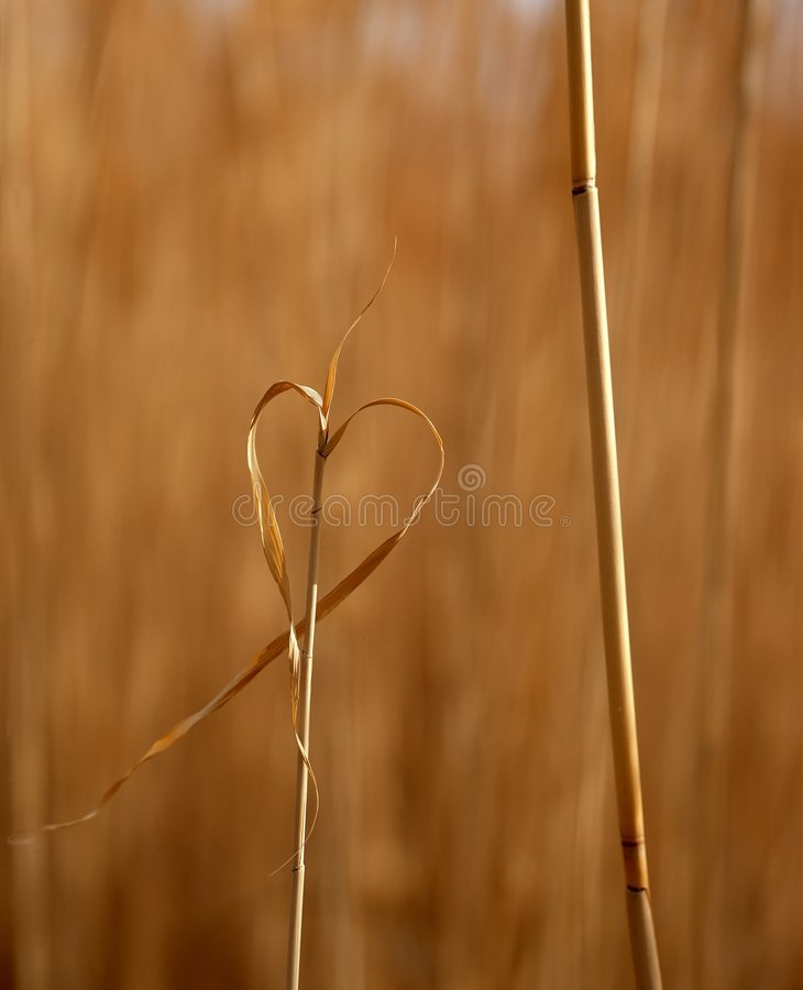 Nature d'amour image stock
