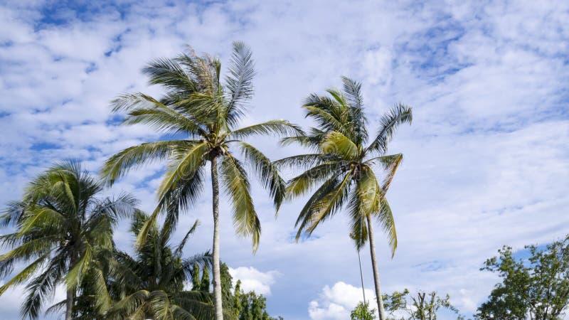 Nature d'arbre de noix de coco contre avec le ciel bleu balançant en vent photo libre de droits