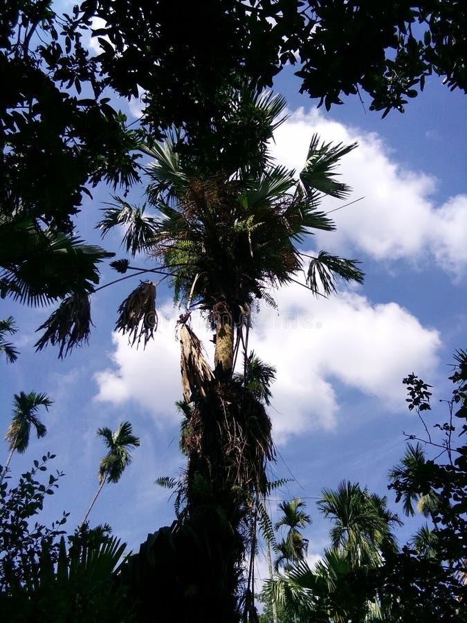 Nature d'Assam photographie stock libre de droits