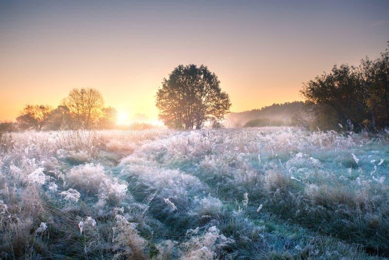 Nature d'automne Nature d'automne Pré couvert par la gelée tôt le matin image stock