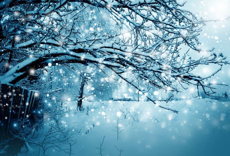 Nature d'hiver, arbre dans une neige photo stock