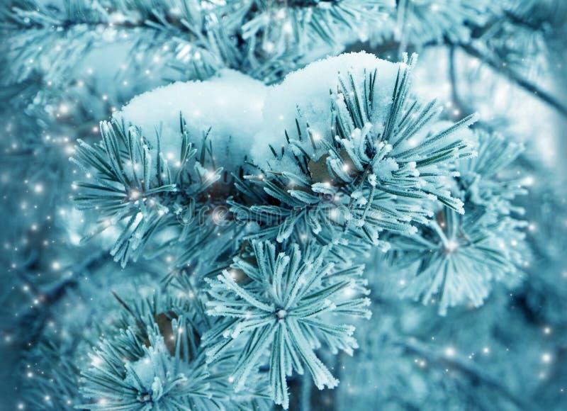 Nature d'hiver, arbre de Noël dans la neige photos stock