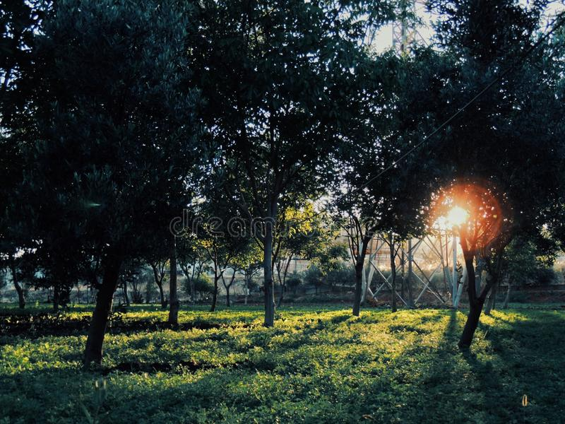 Nature dans Homs Syrie photographie stock libre de droits