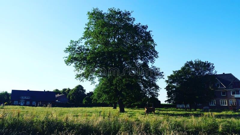 Nature dans Twistringen images stock
