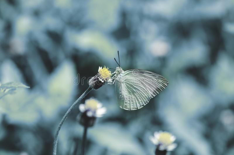 Nature dark concept. Beautiful Butterfly and flowers meadow background.  royalty free stock image