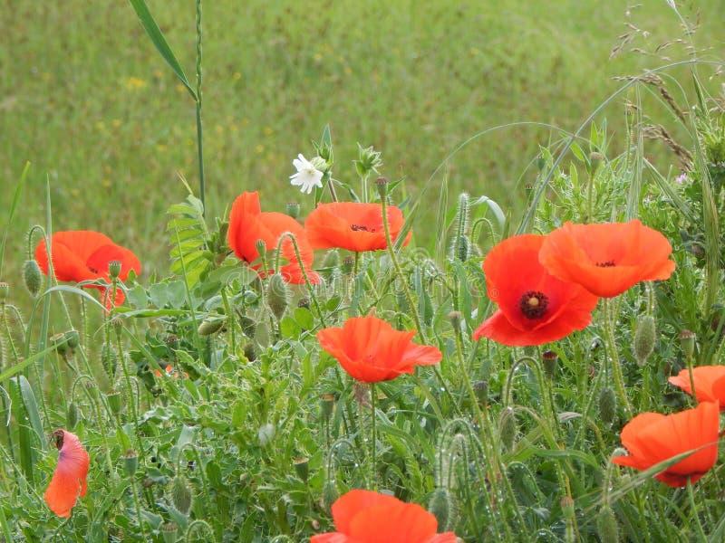Nature de Fleurs photo stock