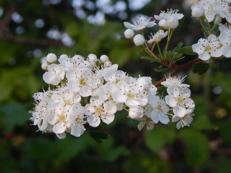 Nature de Fleurs image libre de droits