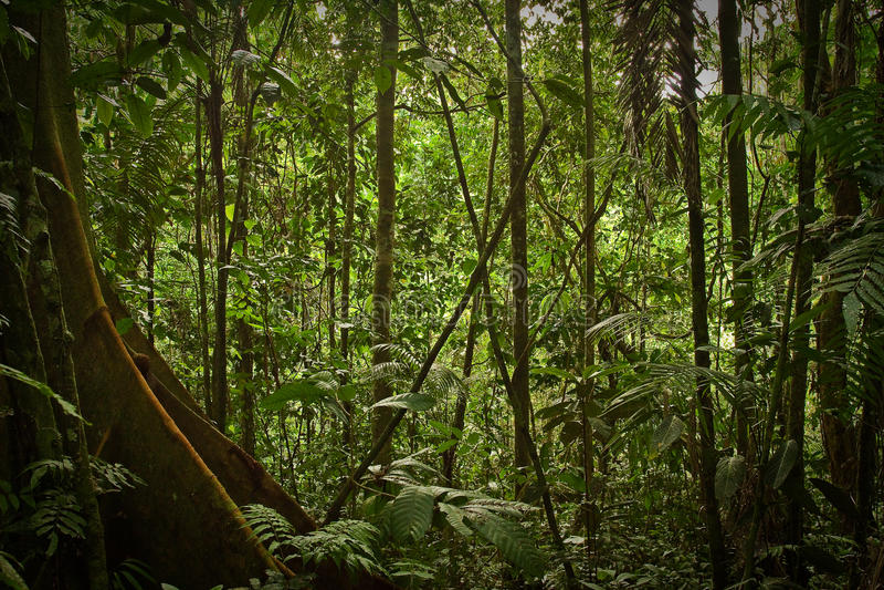 Nature de forêt tropicale, parc national de Yasuni, Equateur photo stock