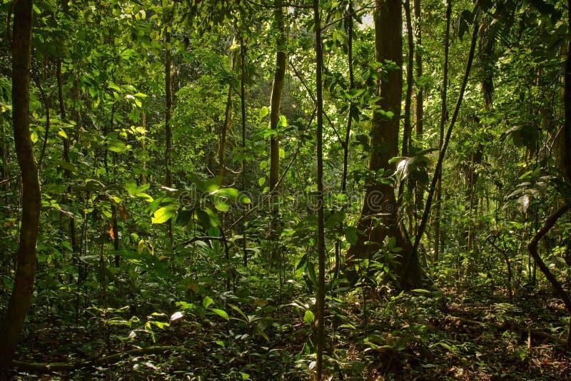 Nature de forêt tropicale, parc national de Yasuni, Equateur images stock