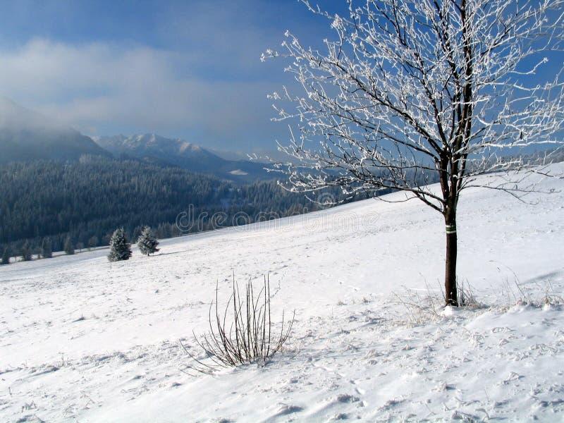 Nature de l'hiver photographie stock