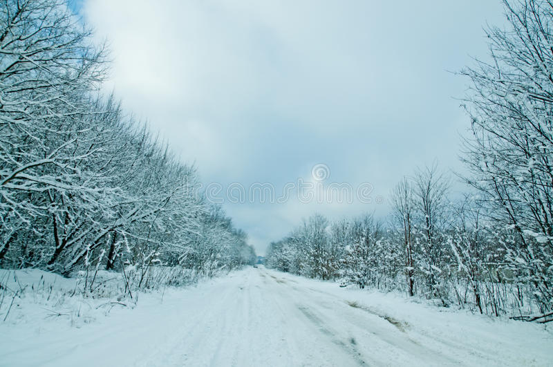 Nature de l'hiver photos stock