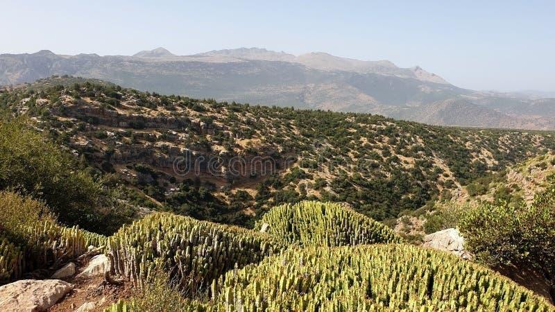 Nature de la montagne photographie stock libre de droits