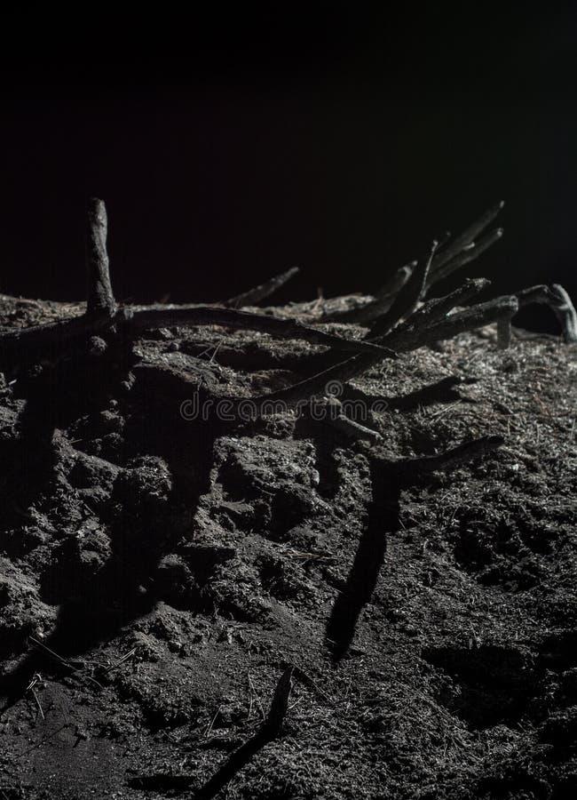 Nature de la mort, incendie de forêt, questions d'écologie, scène de nuit photo libre de droits