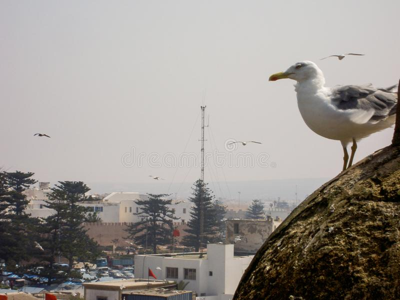 Nature de landsccape de ville d'essaouira du Maroc photo libre de droits
