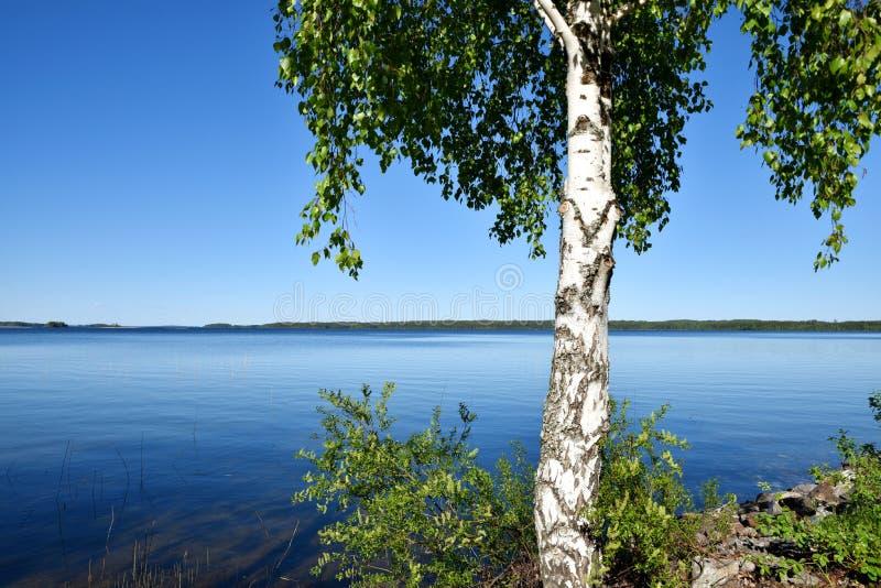 Nature de milieu de l'été en Finlande photographie stock libre de droits