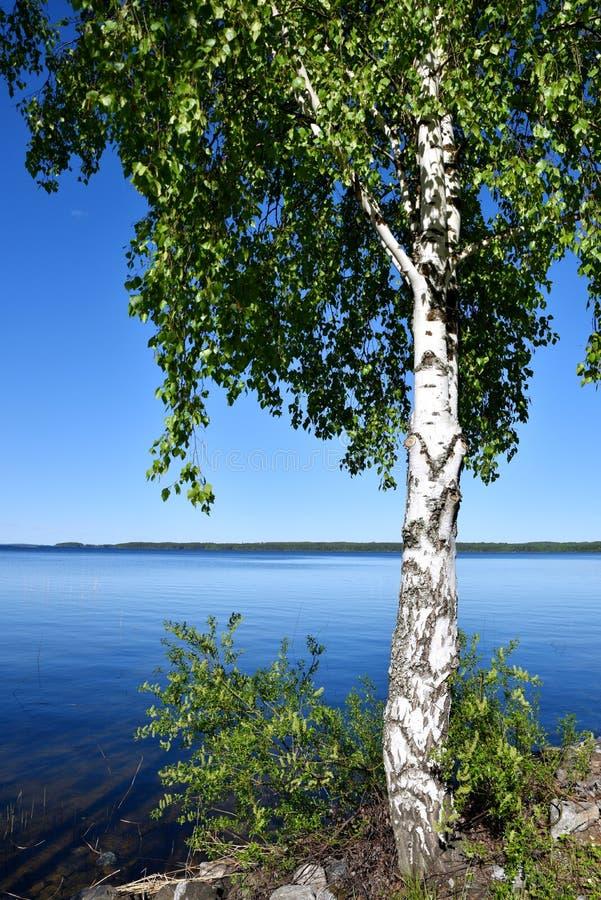 Nature de milieu de l'été en Finlande image stock