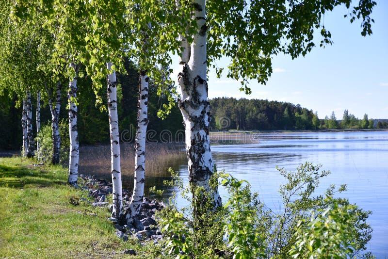 Nature de milieu de l'été en Finlande photo libre de droits