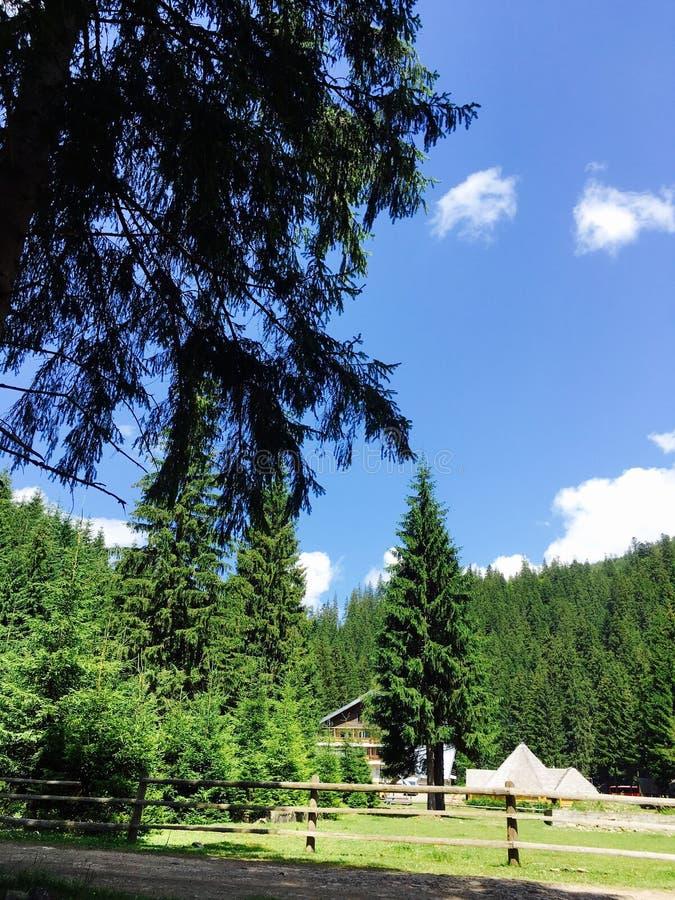 Nature de montagne photographie stock