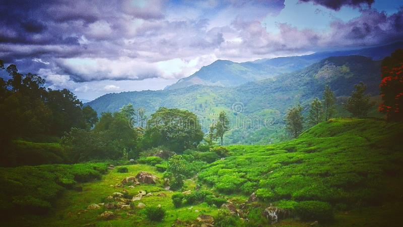 Nature de Munnar photo stock