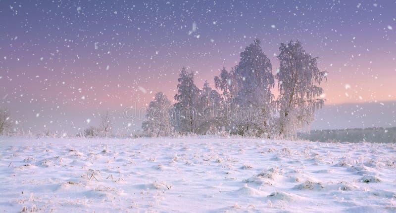Nature de Noël Paysage calme d'hiver en chutes de neige Les flocons de neige tombent sur le pré neigeux avec l'arbre givré à l'au image stock