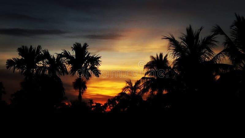 Nature de vue de coucher du soleil de soirée d'Assam photos stock