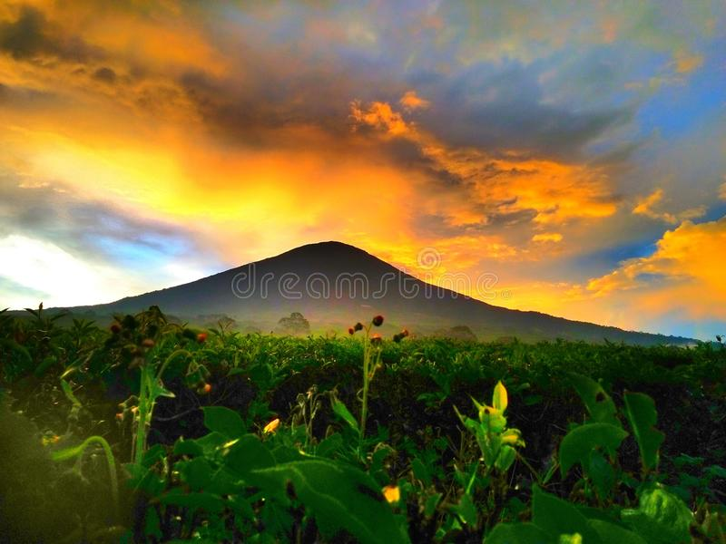 Nature of Dempo Mountain. Sunset from tea plantation stock photo