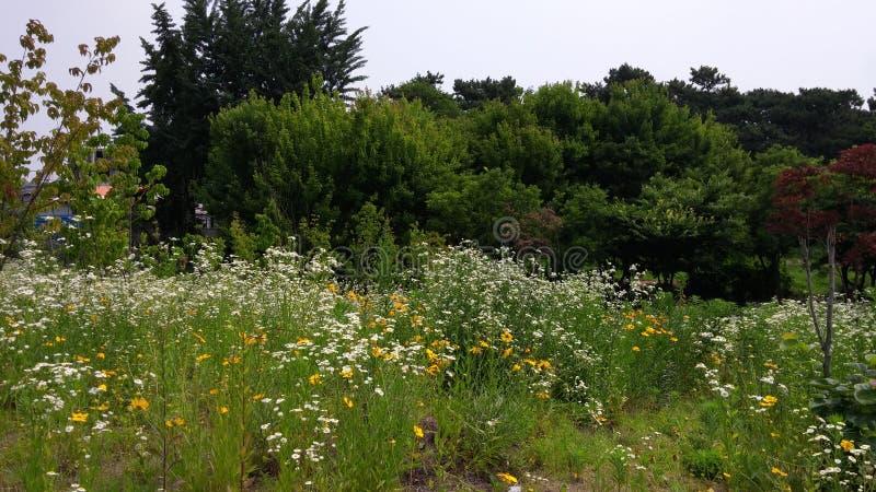 Nature des fleurs image stock
