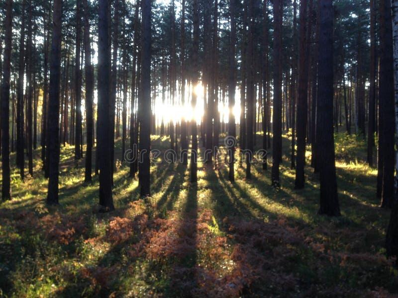 Nature des Monts Oural images libres de droits