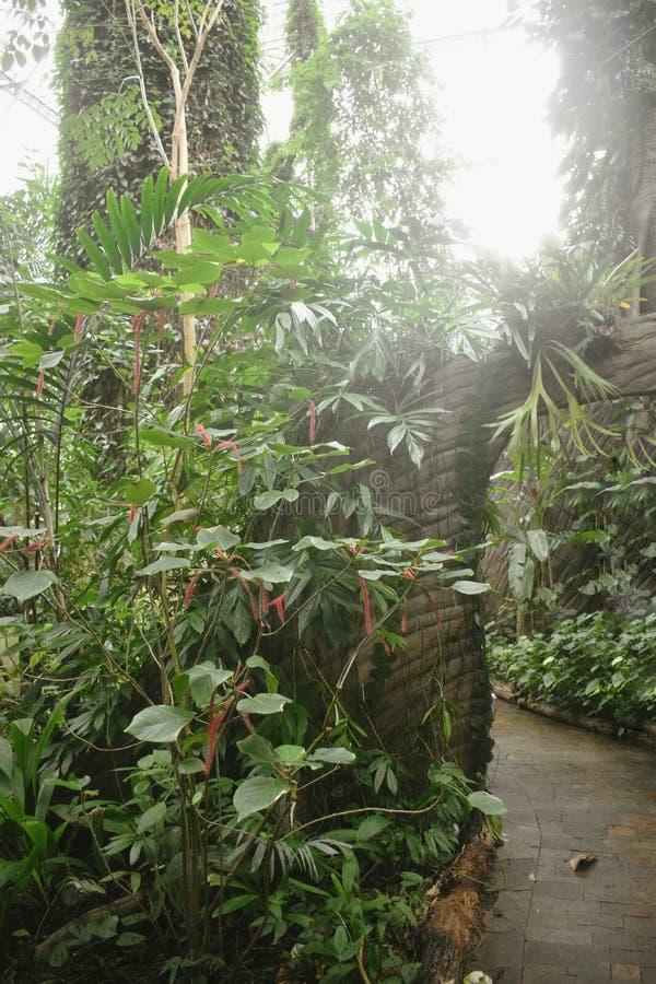 Nature des tropiques photographie stock libre de droits