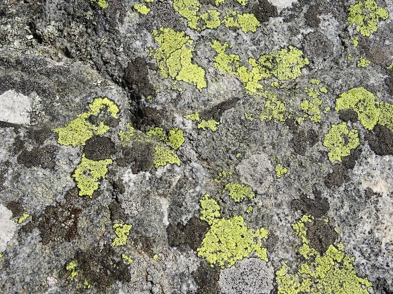Nature details: many different lichens grow on gray rock surface royalty free stock photo