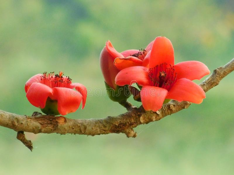 Nature du Bangladesh photographie stock