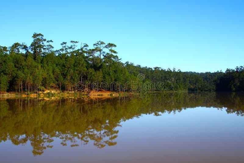 Nature du paysage, forêt de pins verdoyante avec réflexion paisible sur le lac et ciel bleu clair le matin images stock