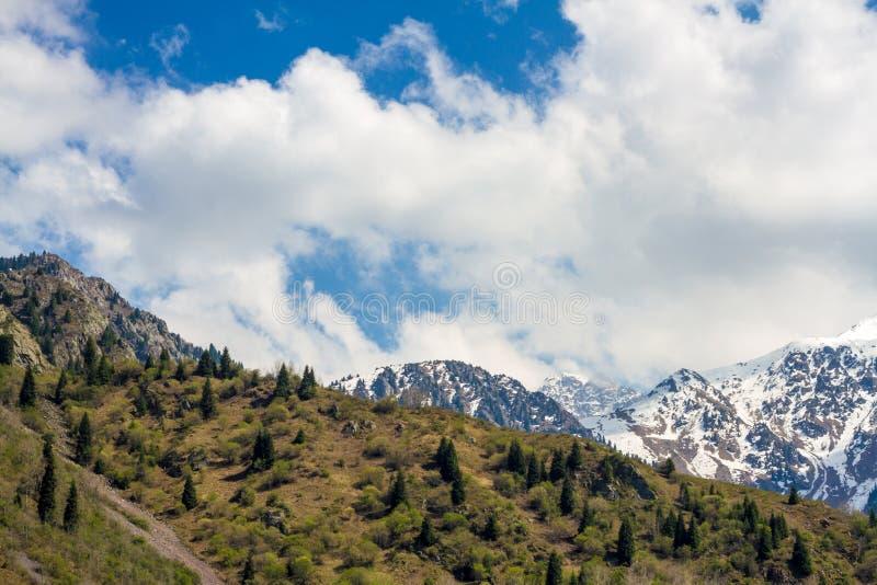 Nature du sapin et ciel de montagne et bleu vert dans Kazakhstan images stock