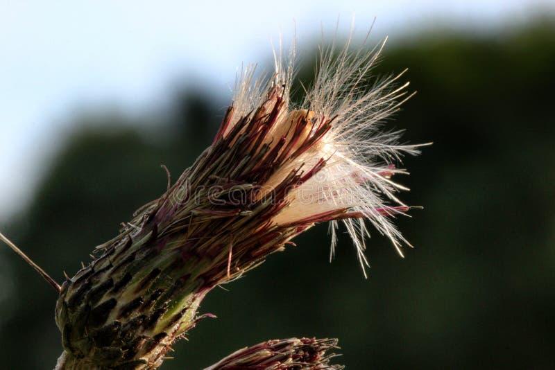 Nature, duvet, fleur, fleurs, macro photo stock