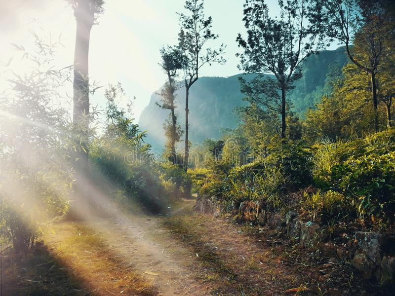 Nature, Ecosystem, Path, Forest stock photos