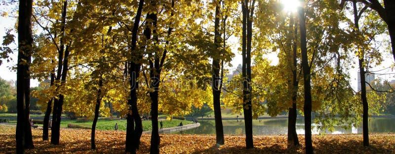Nature, Ecosystem, Yellow, Tree royalty free stock photos