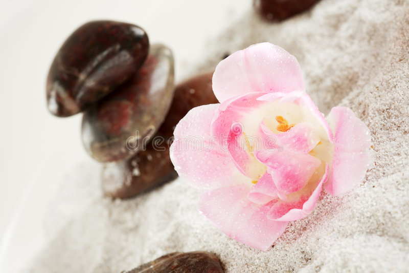 Nature elements. Nature element - sand, flowers and stones royalty free stock image