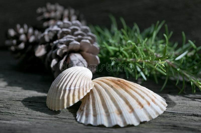 Nature decorative elements on a wooden background royalty free stock photo