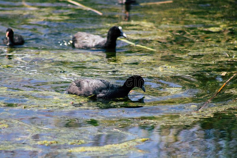 Nature en France images stock