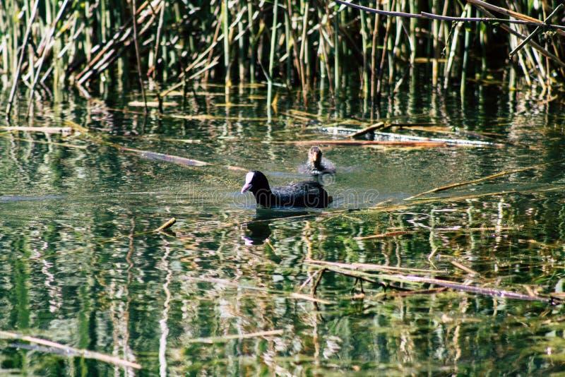Nature en France image stock