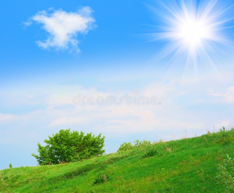 Nature en juin photo stock