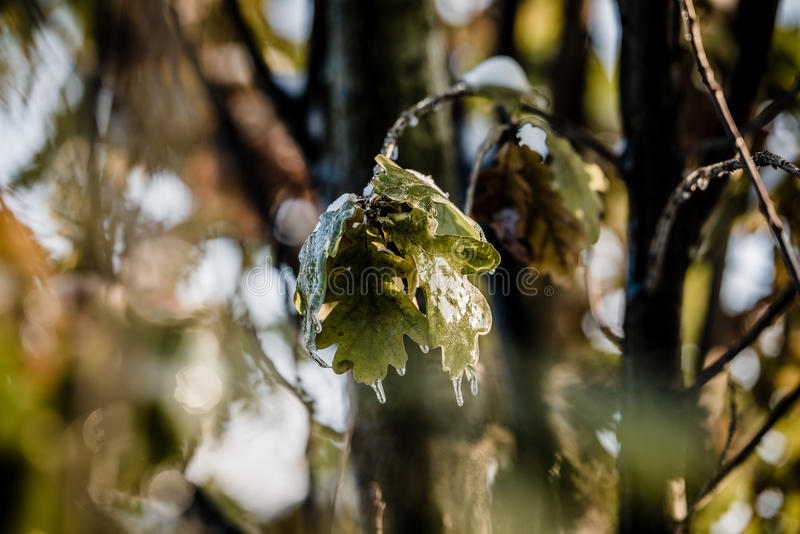 Nature encased in ice after a storm. stock images