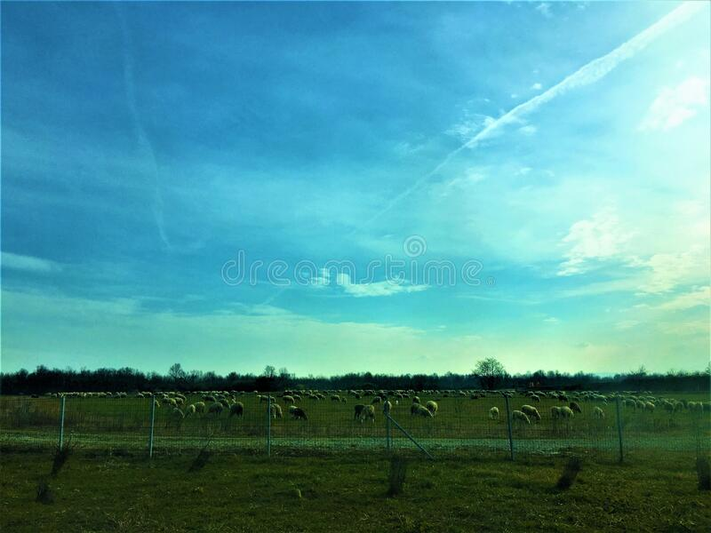 Nature, environment, sheeps, ray of light, peace and sun. Space, trees, sky, horizon, beauty, splendour, relaxing place, universe and world, charm and warmth stock image