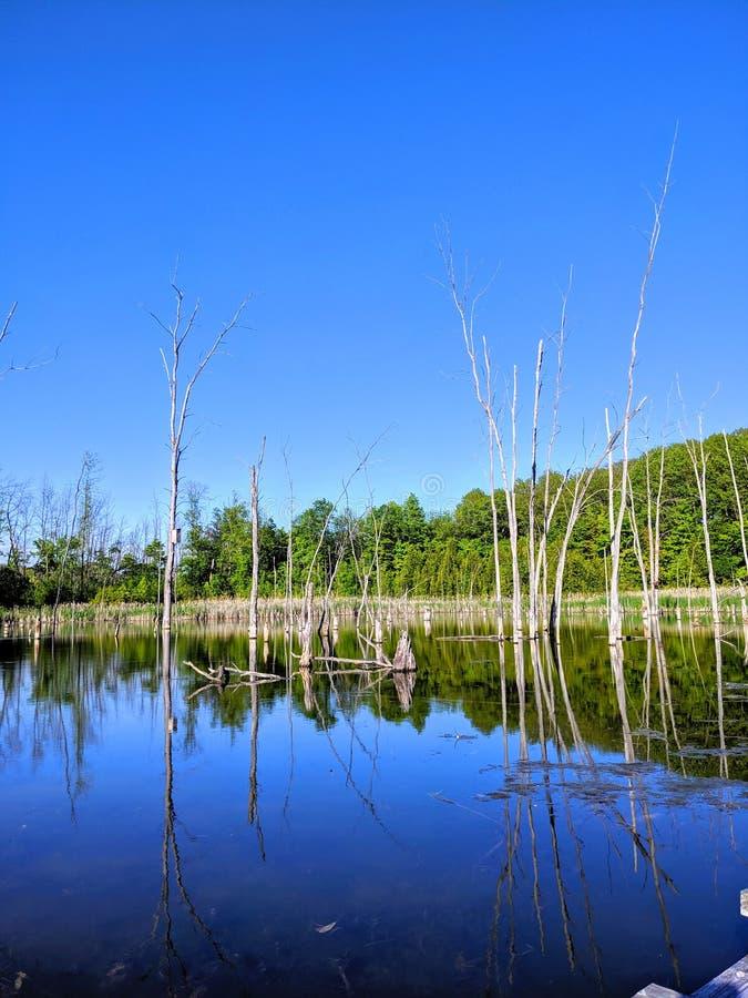 Nature& x27; espejos de s imagen de archivo