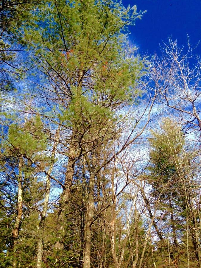 Nature et arbres image libre de droits