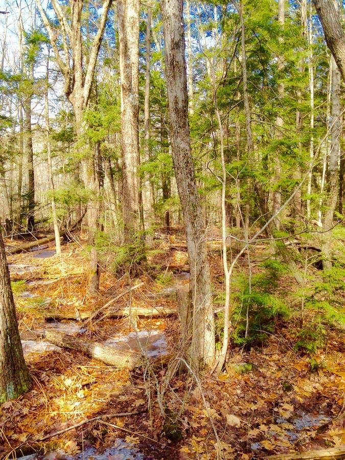 Nature et arbres images stock