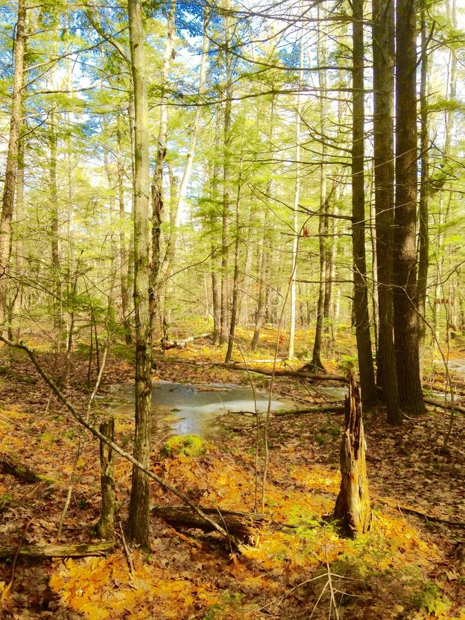Nature et arbres photographie stock